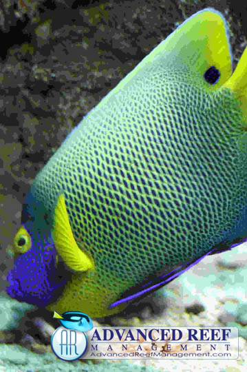 Aquarium fish for saltwater and freshwater tanks