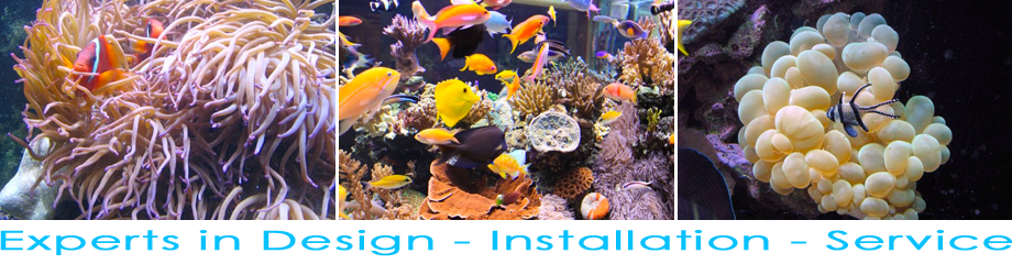 Contact the experts at Advanced Reef Management for reef aquarium design, installation and service
